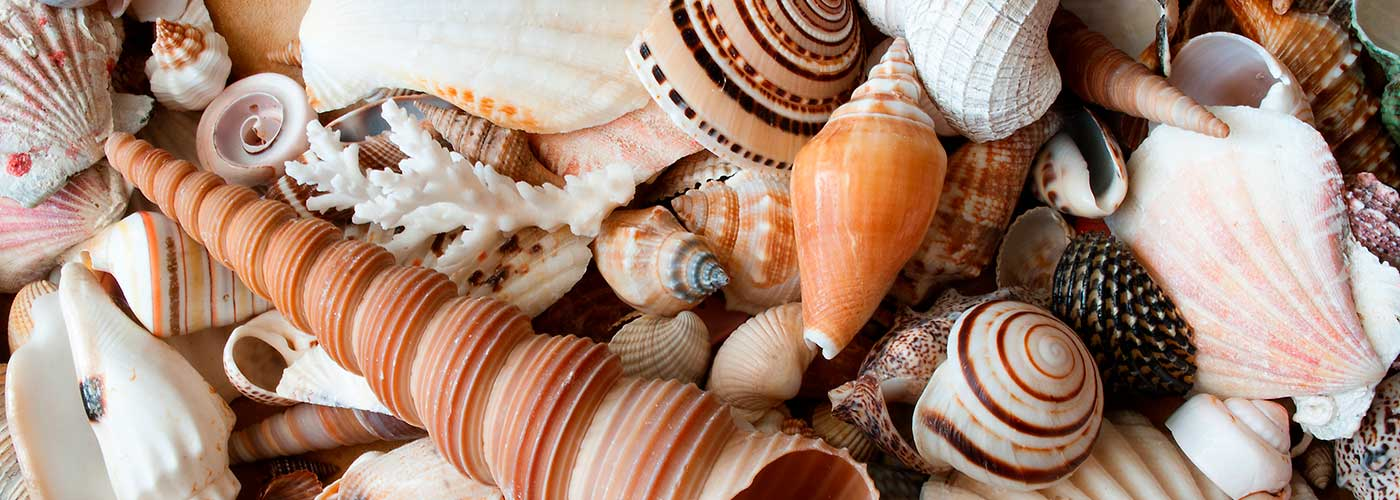 Holman Seashell Collection